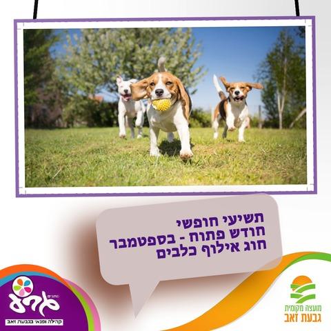 תשיעי חופשי - אילוף כלבים
